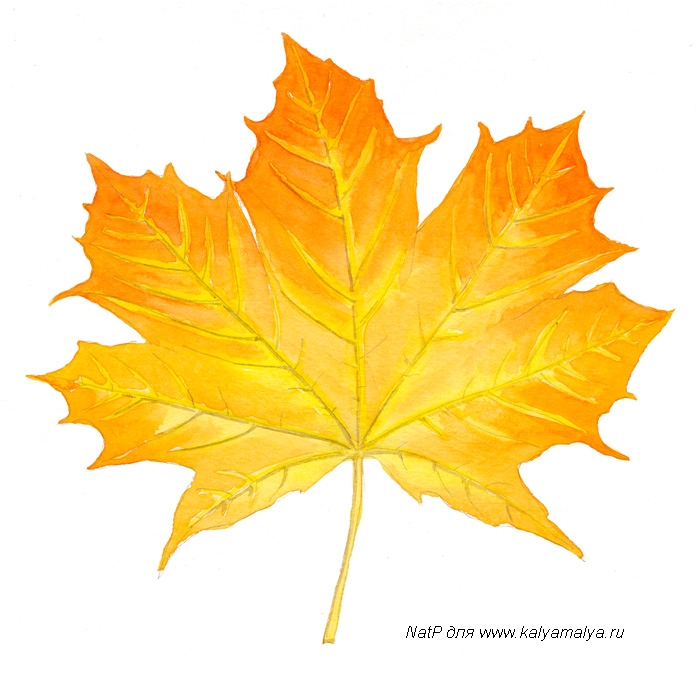 /images/library/lessons/maple-leaf4.jpg